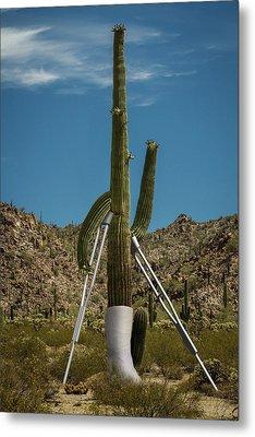 Crippled Cactus Metal Print