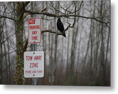 Crow Asking For A Citation In Magnuson Park In Seattle Metal Print by Shirley Stevenson Wallis