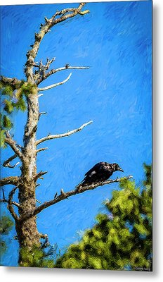 Crow In An Old Tree Metal Print by Ken Morris