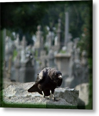 Crow In The City Of Stone Metal Print by Gothicrow Images