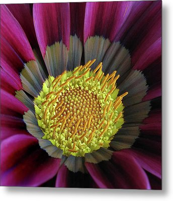 Metal Print featuring the photograph Crown Of Pollen by David and Carol Kelly