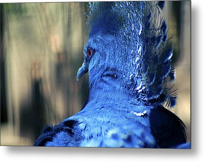 Metal Print featuring the photograph Crowned Pigeon by Terry Cork