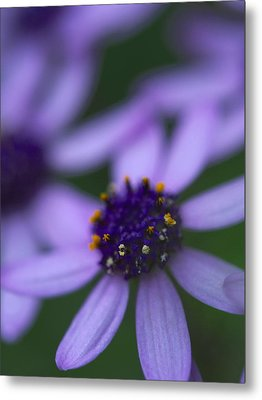 Crowned With Purple Metal Print