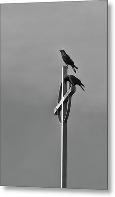 Metal Print featuring the photograph Crows On Steeple by Richard Rizzo
