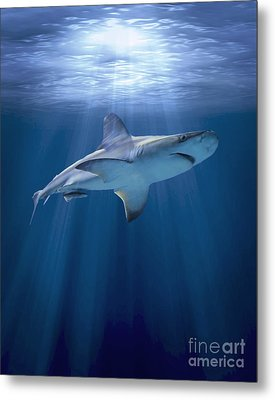 Cruising Shark Metal Print by Liz Molnar