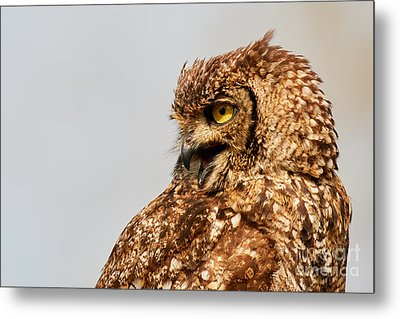 Crying Spotted Eagle-owl  Metal Print by Nick Biemans