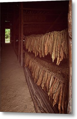 Metal Print featuring the photograph Cuban Tobacco Shed by Joan Carroll