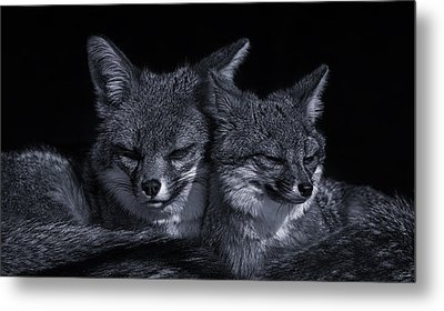 Cuddle Buddies  Metal Print