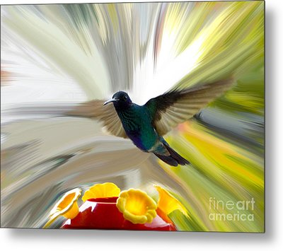 Cuenca Hummingbird Series 1 Metal Print by Al Bourassa