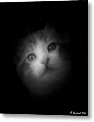 Metal Print featuring the photograph Curiosity by Betty Northcutt