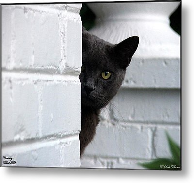 Curiosity Metal Print by Robert Meanor