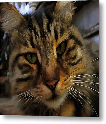 Curious Cat Metal Print by Tracey Harrington-Simpson