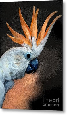 Curious Cockatoo  Metal Print by Norman  Andrus