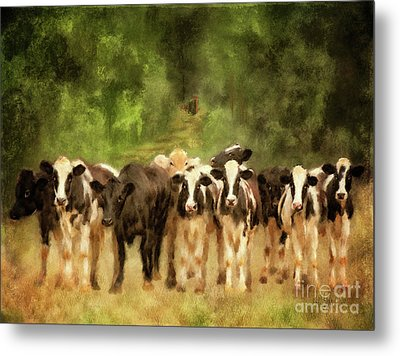 Metal Print featuring the digital art Curious Cows by Lois Bryan