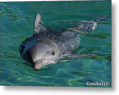 Metal Print featuring the photograph Curious Dolphin by Gary Crockett