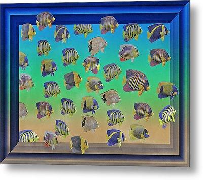Curious Fish Metal Print by Betsy Knapp