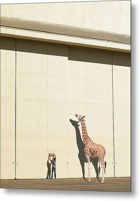 Curious Giraffe Metal Print