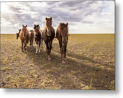 Metal Print featuring the photograph Curious Horses by Hitendra SINKAR