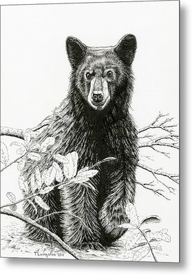 Curious Young Bear Metal Print