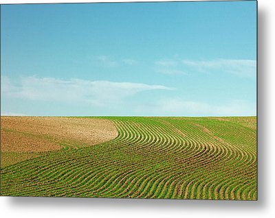 Curvy Rows Metal Print by Todd Klassy