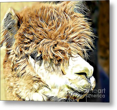 Soft And Shaggy Metal Print