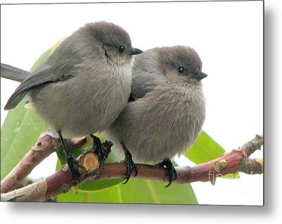 Cute Chicks Metal Print