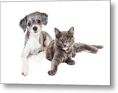 Cute Grey Kitten And Puppy Laying Together Metal Print by Susan Schmitz