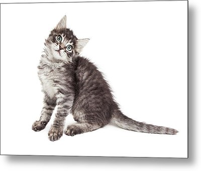 Cute Kitten Tilting Head Over White Metal Print