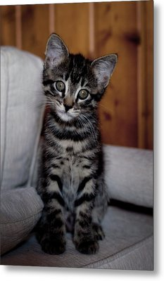 Metal Print featuring the photograph Cute by Laura Melis