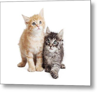 Cute Orange And Black Tabby Kittens Together Metal Print by Susan Schmitz