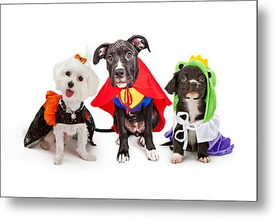 Cute Puppy Dogs Wearing Halloween Costumes Metal Print by Susan Schmitz