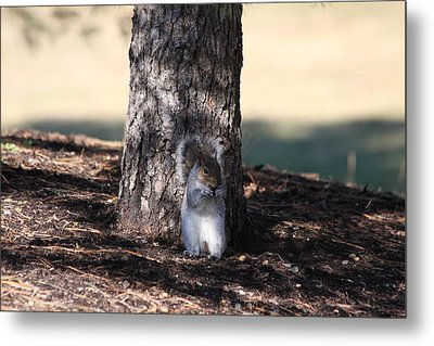 Metal Print featuring the photograph Cute Squirrel by Vadim Levin