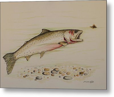 Cutthroat Trout Metal Print by Jeff Harrell