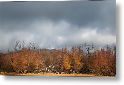 Cuyamaca Autumn Metal Print by Joseph Smith