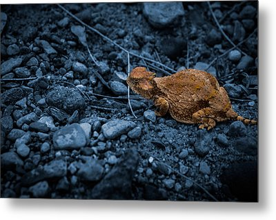 Cyanotype Horned Toad Metal Print