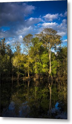 Cypress And Oaks Metal Print by Marvin Spates