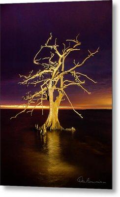 Cypress At Sunset 2860 Metal Print