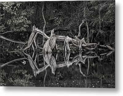 Metal Print featuring the photograph Cypress Design by Steven Sparks