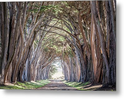 Metal Print featuring the photograph Cypress Embrace by Everet Regal