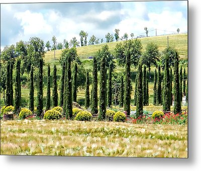 Cypress Heaven Metal Print