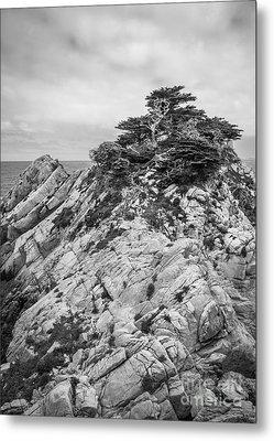 Cypress Island Metal Print