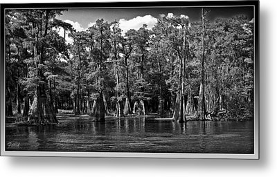 Cypress On The Suwannee Metal Print by Farol Tomson