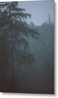Cypress Swamp Metal Print by Kimberly Mohlenhoff
