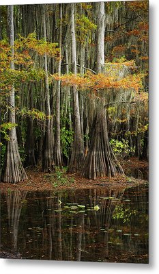 Cypress Trees Forest Metal Print by Iris Greenwell
