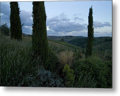 Cypress Trees Growing In The Rolling Metal Print by Todd Gipstein