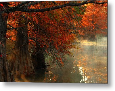 Cypress Trees In Red Metal Print by Iris Greenwell