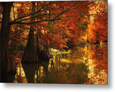 Cypress Trees In The Misy Morning Metal Print by Iris Greenwell