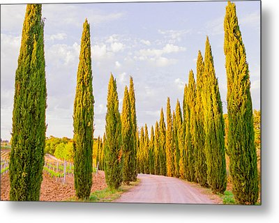 Cypress Trees In Tuscany Metal Print