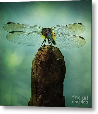 D4maureen Metal Print by Doug Sturgess