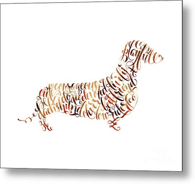 Dachshund Metal Print by Laura Bell